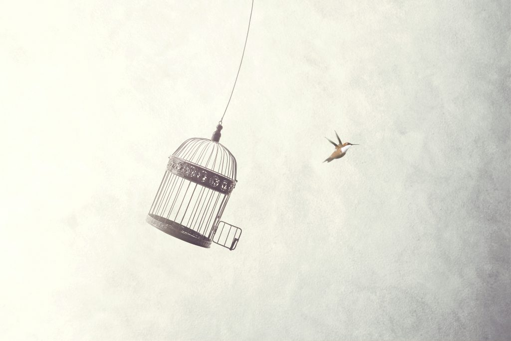 Bird flying out of birdcage as if freed for the first time.